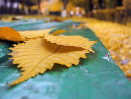 yellow autumn leaves lie on the green bench in city park photo