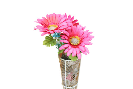 Colorful pink chrysanthemums artificial  flowers blooming ,isolated Stock Photo