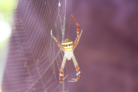 colorful spider hanging on spider web,asia