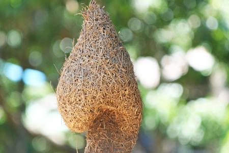 Huge bird nest hanging on the tree