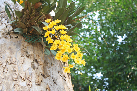 Yellow orchid closeup photo