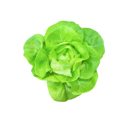 Top view fresh green butterhead lettuce organic salad vegetable with water drops isolated on white background with clipping path