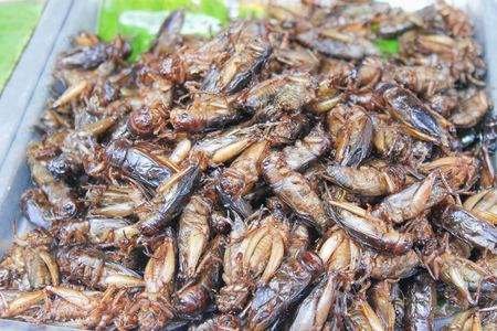 Healthy exotic food fried insects in local street market in Thailand , cricke or acheta domestica