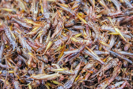 Healthy exotic food fried insects in local street market in Thailand ,  Grasshopper