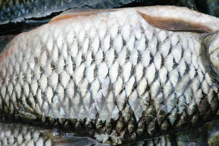 Too view fresh raw siamese mud carp or white fish skin  , nature fresh water patterns texture 免版税图像