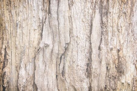 Grunge old wood skin patterns , nature wall background Stock Photo