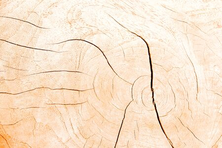 Light brown wood cross section rings nature texture with line cracked patterns of tree trunk background