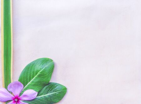 Decorative green leaves and colorful pink patterns on old blank brown grunge paper texture for background, copy space