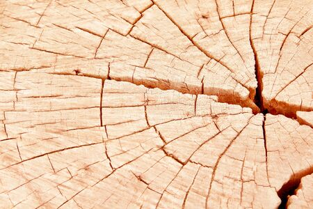 wood cross section rings nature texture brown  with line cracked patterns of tree trunk background