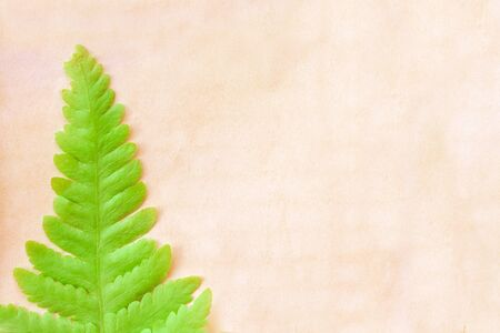 Single colorful green fern leaves on old blank brown grunge paper texture for background,  copy space