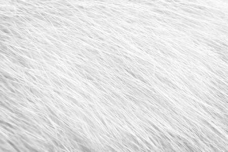 Fur cat natural line texture, white or gray animal patterns for background Reklamní fotografie