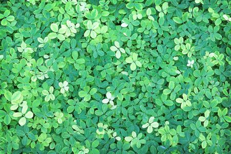 Pinto peanut green leave patterns nature outdoor top view background