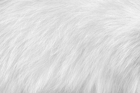 Cat fur animal skin , White or gray surface background Stock Photo
