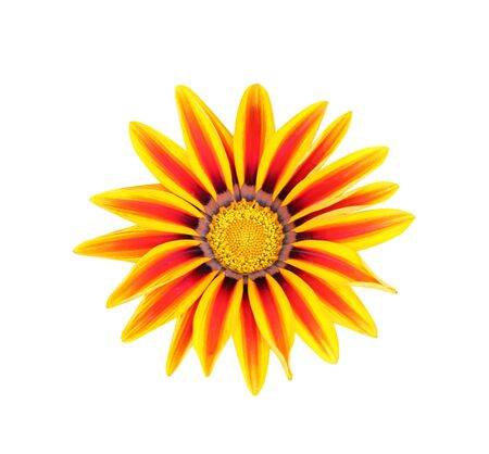 Gazania rigens colorful flowers isolated on white background top view Banque d'images