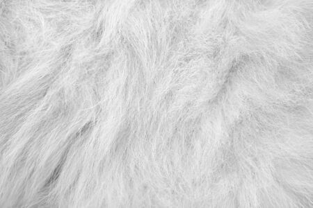 Fur cat white gray texture patterns abstract  background