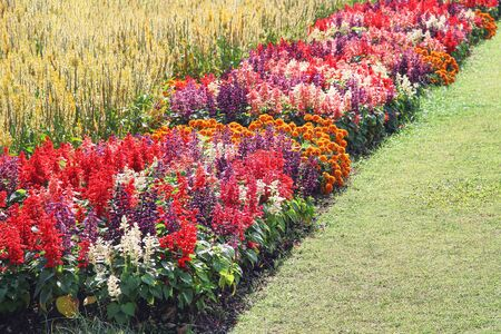 Multicolored flowers blooming in nature garden outdoor background