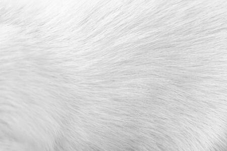 Animal fur white grey patterns , dog skin background