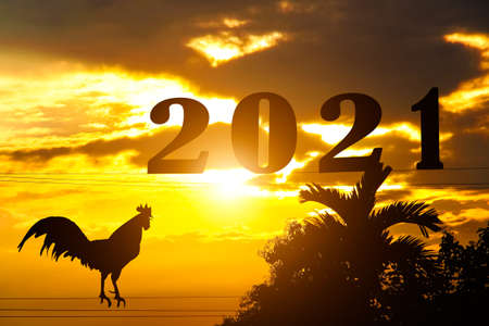 Silhouette of  rooster crowing on electric wires and plam tree top with sunrise on  beautiful sky morning  background ,  welcome new year 2021
