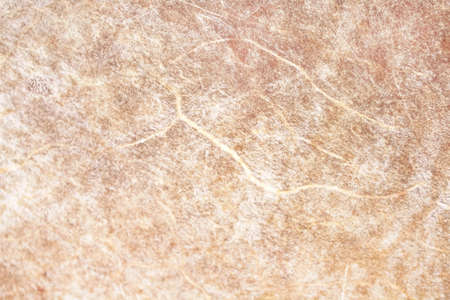 cat fur light gray or white texture patterns abstract , animal skin background