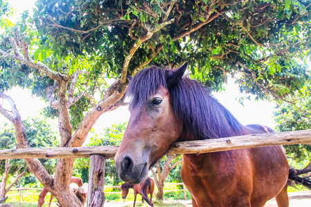 Soft focus eye of brown horse , animal face background 版權商用圖片