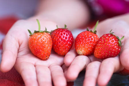 A hand holding a bunch of strawberries