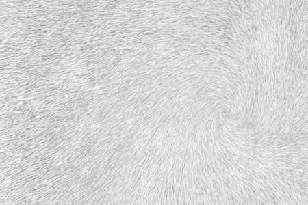 Dark gray cow fur texture line patterns abstract for background