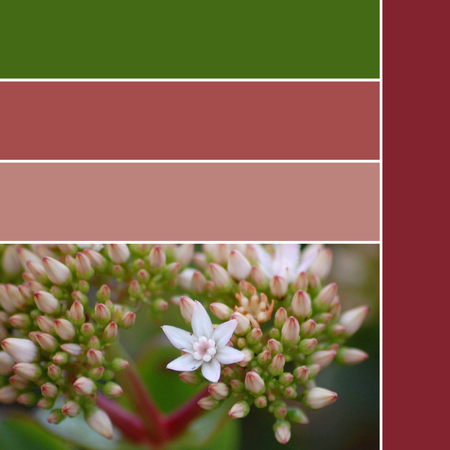 Color palette inspired by nature, flowers