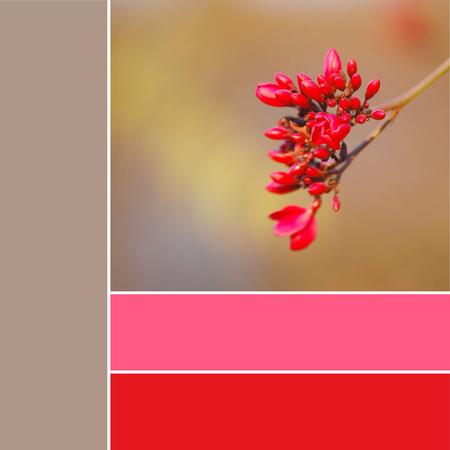 Red flower color palette