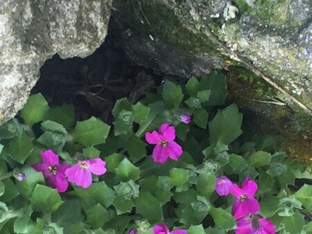 Purple flowers in rocks