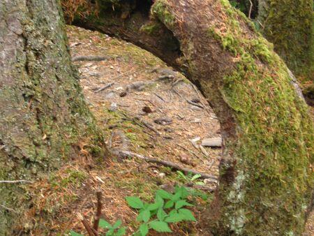 Tree loop Фото со стока