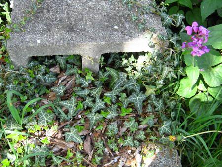 ツタ覆われた紫色の花と庭のステップ