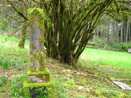 abandoned grave with mossy tree