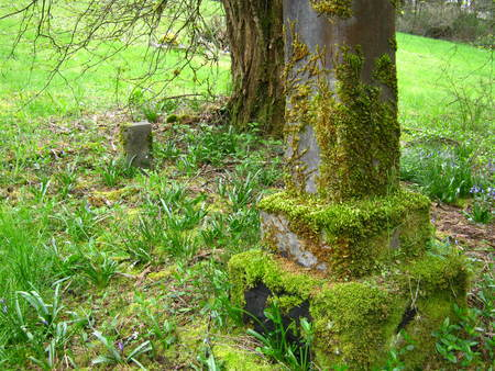 abandoned grave