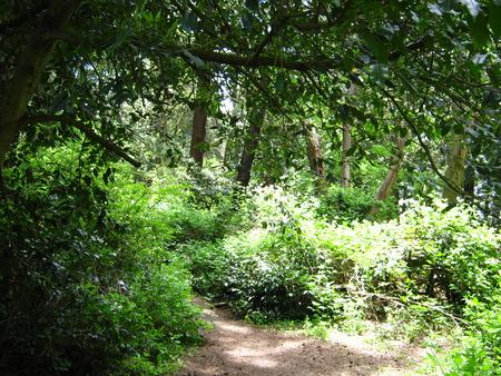 sharp turn in hiking trail