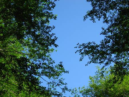 ciel bleu entre les arbres Banque d'images