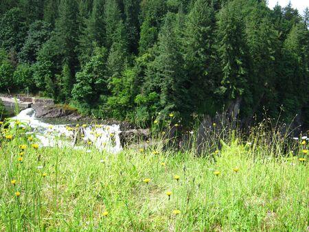 ravine with trees Фото со стока