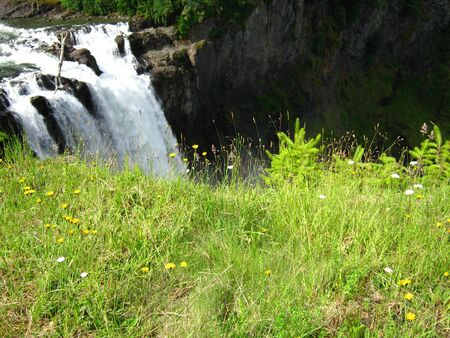 waterfall with grass