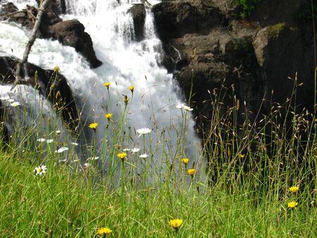 waterfall with dandelions Фото со стока