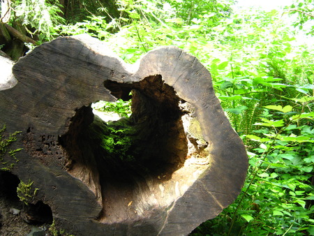 Hollowed log Stock Photo