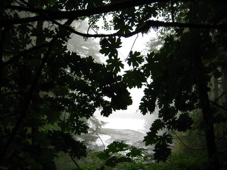 tree under-view with fog