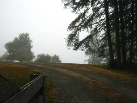 Country lane with fog Фото со стока