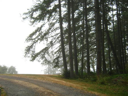 country road with fog