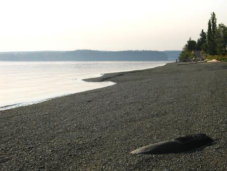 beach with trees and large stone Фото со стока