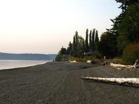 beach with trees and driftwood Фото со стока