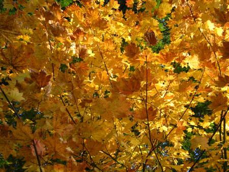 yellow fall leaves Фото со стока