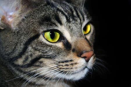 close up shot a cat's face Stock Photo - 6136838