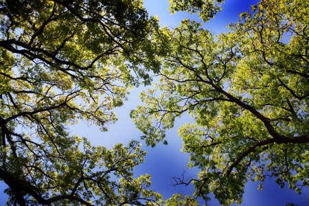 alberi ad alto fusto con cielo blu