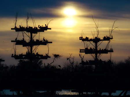 il sole tramonta dietro un uccello in pericolo rookery