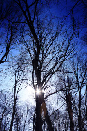 the sun shines through trees in the winter