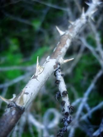 un cespuglio spinoso nei boschi